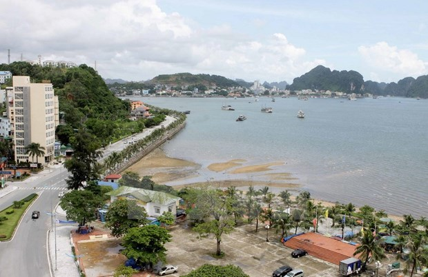 Quang Ninh's cooperatives build linkages to survive hinh anh 1