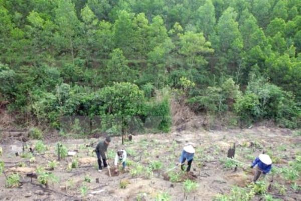 Tuyen Quang fulfills afforestation plan for whole year hinh anh 1