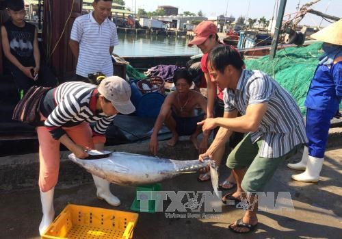 Thua Thien – Hue: offshore fishing fares well hinh anh 1