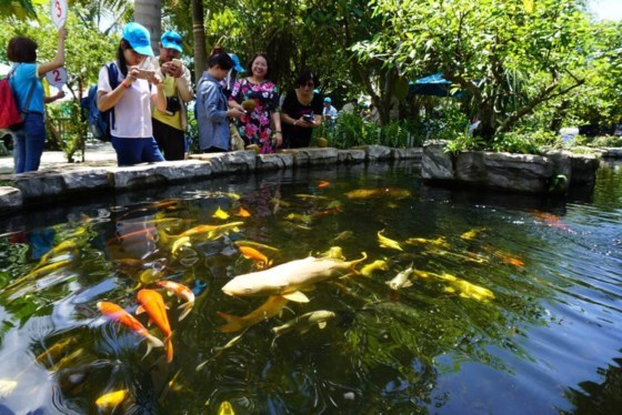 HCM City advised to fully tap agritourism potentials hinh anh 1