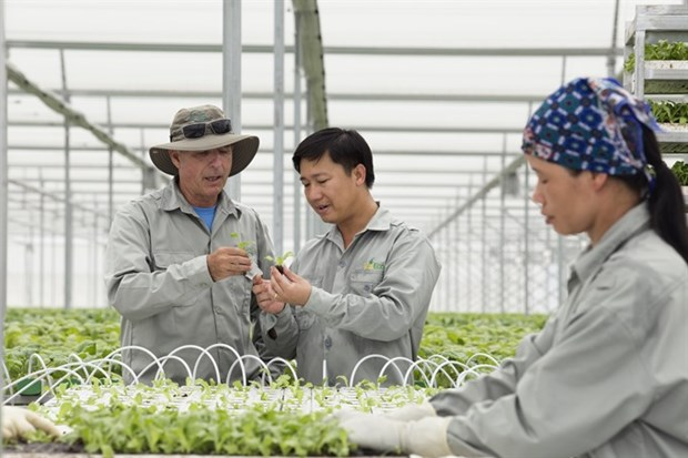 Hi-tech farms offer a vision of the future, today hinh anh 1