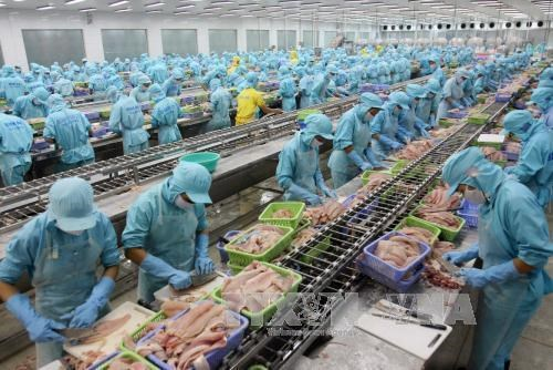 Vietnam yields over 2.6 million tonnes of aquatic products in nine months hinh anh 1