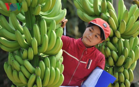 Vietnamese farm produce seeks path to Middle East hinh anh 1