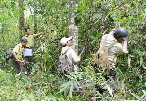 Vietnam collects nearly 1.1 trillion VND in forest environment fees hinh anh 1