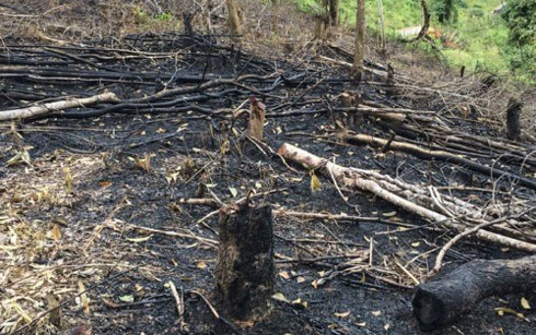 Forests destroyed in northern Dien Bien province hinh anh 1
