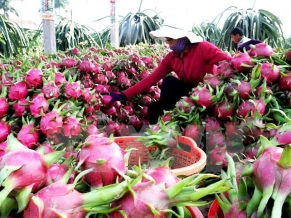 Vietnam seeks ways to boost fruit, veggie exports to EU hinh anh 1