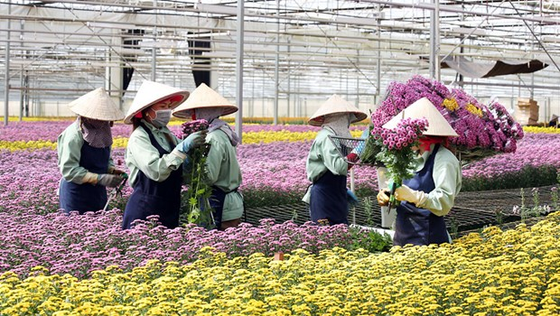 Lam Dong has more high-tech flower, vegetable growing project hinh anh 1