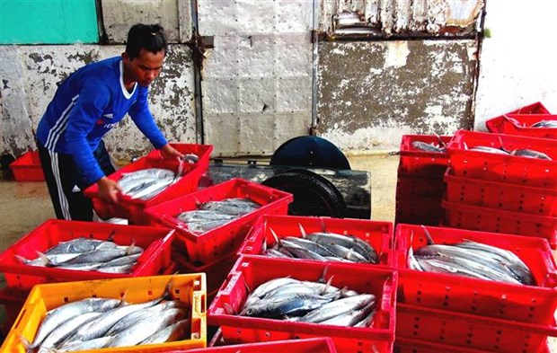 Tien Giang's fishermen enjoy bumper catch hinh anh 1
