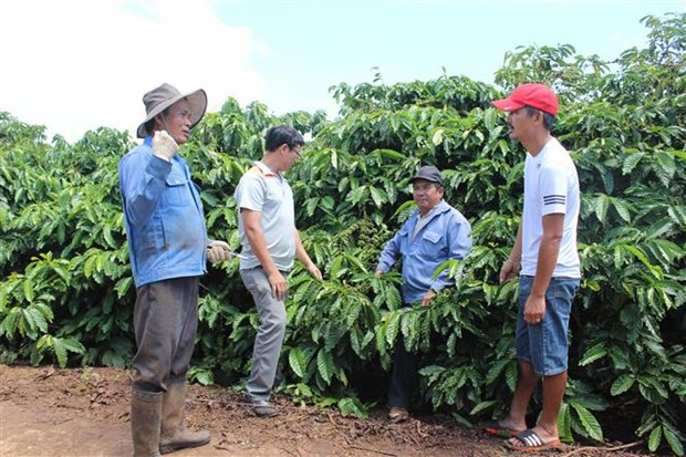 Lam Dong to host first Vietnam Coffee Day hinh anh 1