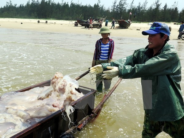 Deputy PM asks to complete marine incident compensation in November hinh anh 1