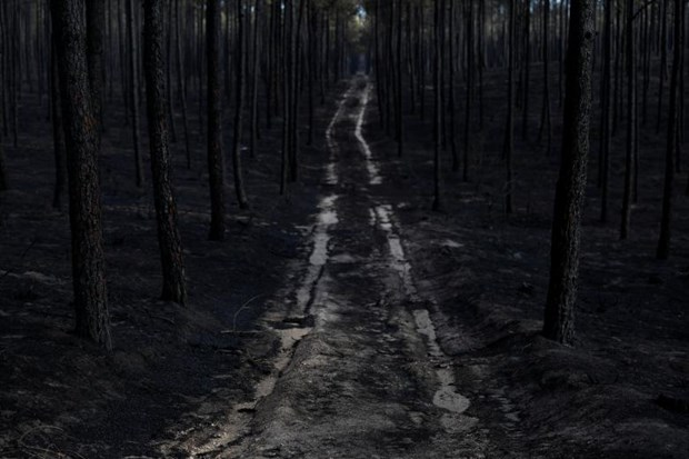 Condolences sent to Portugal over wildfires hinh anh 1