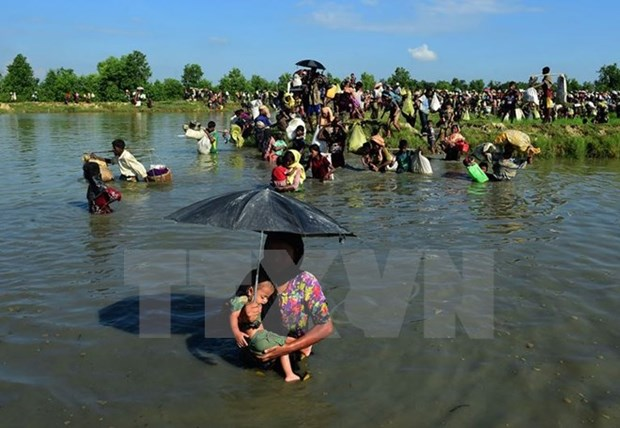 Over 7,000 granted national verification cards in Rakhine state hinh anh 1