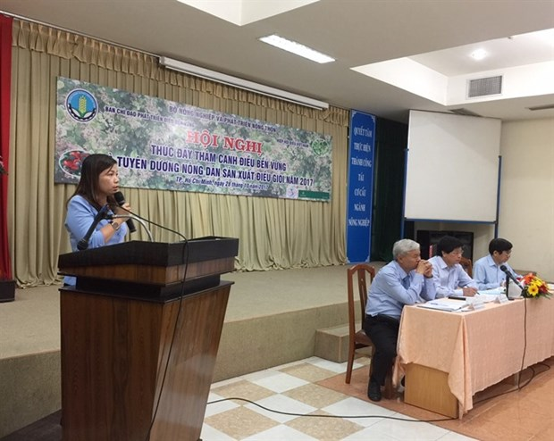 Cashew industry faces volatile weather, pests hinh anh 1