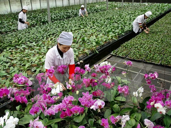 Lawmakers urge strong boost to fruit & vegie export, logistics sector hinh anh 1