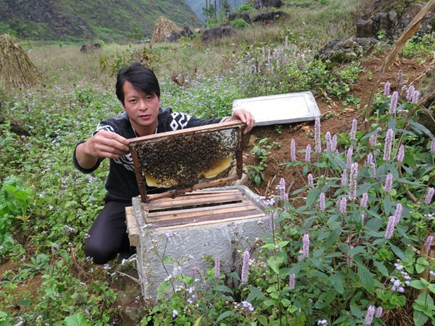 Ha Giang seeks solutions to sustainable beekeeping development hinh anh 1
