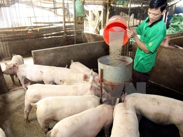 Cooperation to enhance animal feed supply chain management hinh anh 1