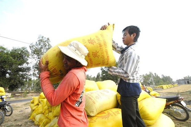 Rice farmers rue missing out on price rise hinh anh 1