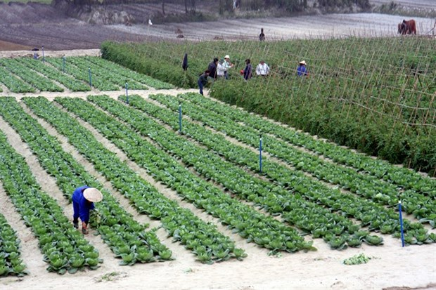 Green trees help Ha Tinh province move on hinh anh 1