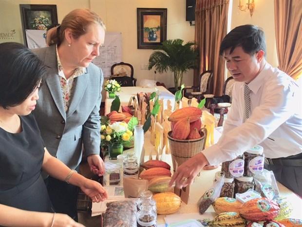 Fair-trade status for Vietnam's cocoa to ease access to EU market hinh anh 1