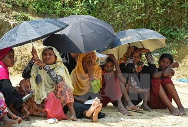 Myanmar, Bangladesh begin talks to repatriate Rohingya people hinh anh 1