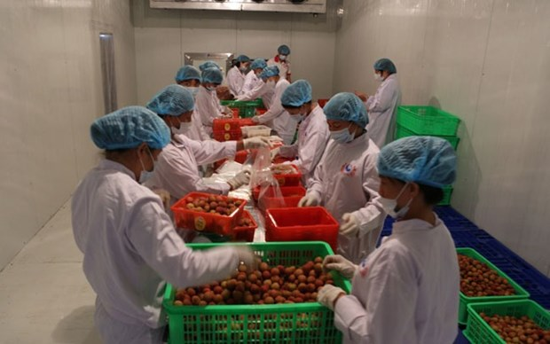 Fruit industry needs technology to reach potential hinh anh 1