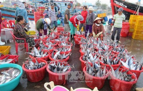 ICFO supports Vietnamese fishermen hinh anh 1