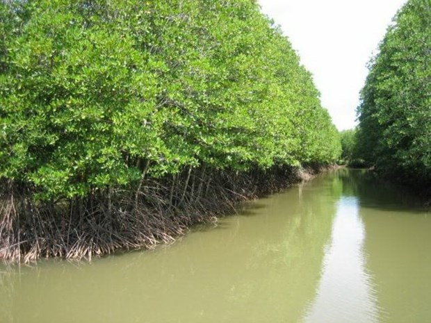 Ca Mau moves to protect coastal forests hinh anh 1