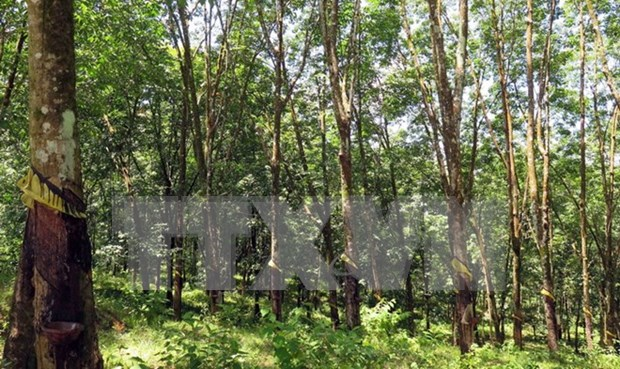 Quang Tri signs rubber plantation contract with Laos hinh anh 1