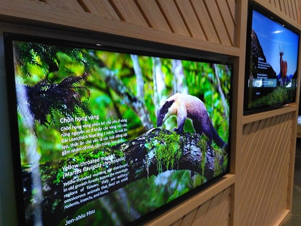 Exhibition shows biodiversity of Vietnam, Taiwan hinh anh 1