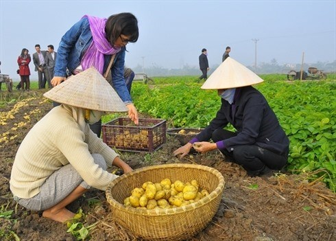 Vietnam yet to sow seeds of low carbon rice hinh anh 1