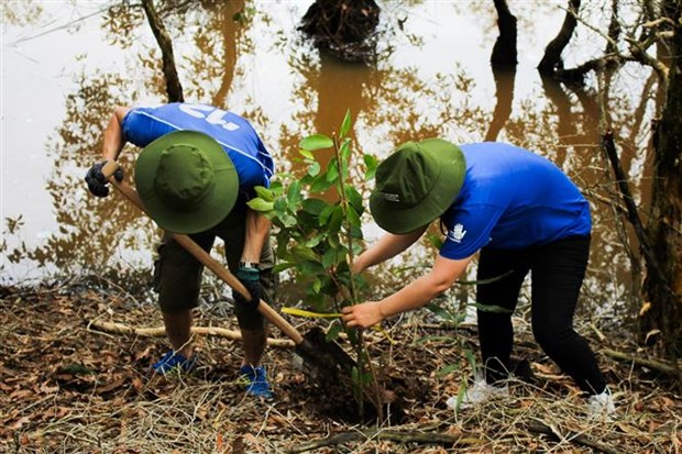 WWF, Intel continue wetland reforestation project in Long An hinh anh 1