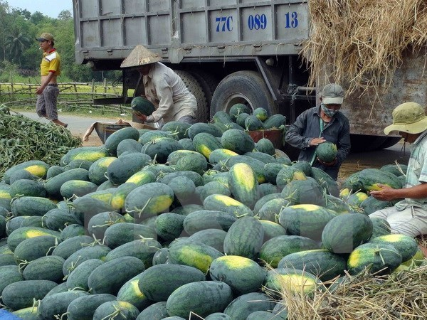 Vietnamese, Chinese firms ink watermelon trade deals hinh anh 1