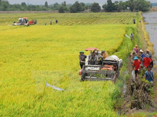 Dak Lak's food production reaches record high hinh anh 1