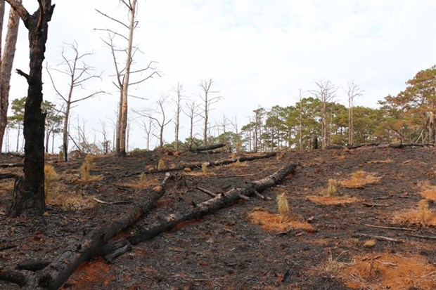 Vietnam's protected forest dwindling hinh anh 1