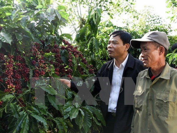 Measures sought to increase added value of coffee hinh anh 1