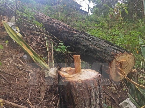 Dak Nong official held for violating forest regulations hinh anh 1