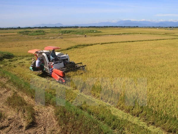 Vietnam's rice market fares well hinh anh 1
