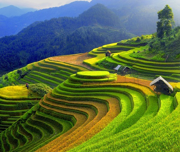 Mu Cang Chai named as worthy visit by US travel site hinh anh 1