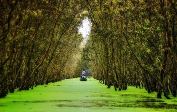 Tra Su Cajuput Forest attracts more visitors to An Giang hinh anh 1