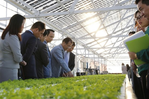 FLC to invest 1.5 billion USD in hi-tech farm hinh anh 1