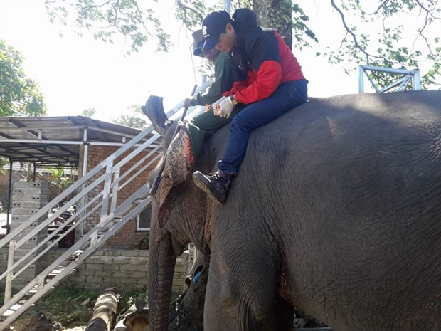 Bio-data chips implanted in tame elephants hinh anh 1