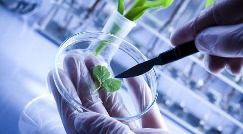 RoK to spend 328 mln USD to develop bio tech in 2018 hinh anh 1