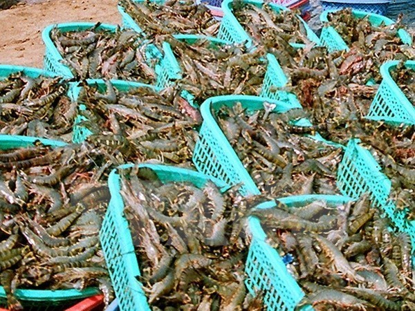 Tra Vinh: seafood exports expected to reach 352 mln USD in 2018 hinh anh 1