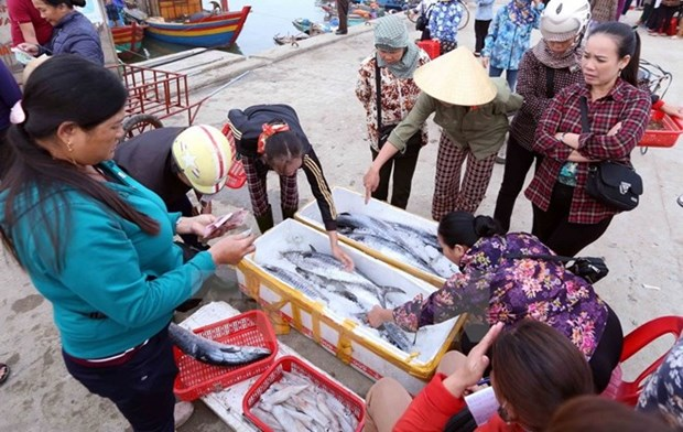 Kien Giang moves to fight illegal fishing hinh anh 1