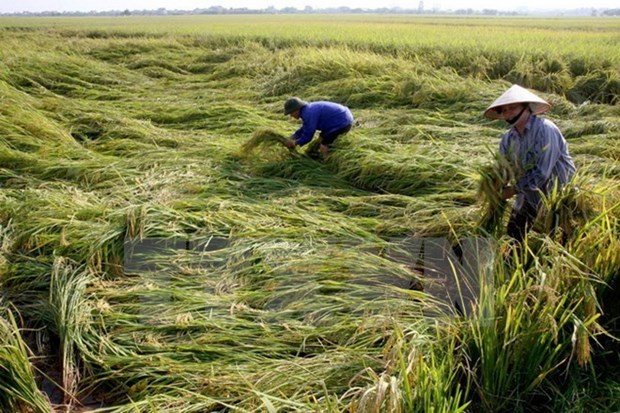 Agriculture sector acts to lure more investments hinh anh 1