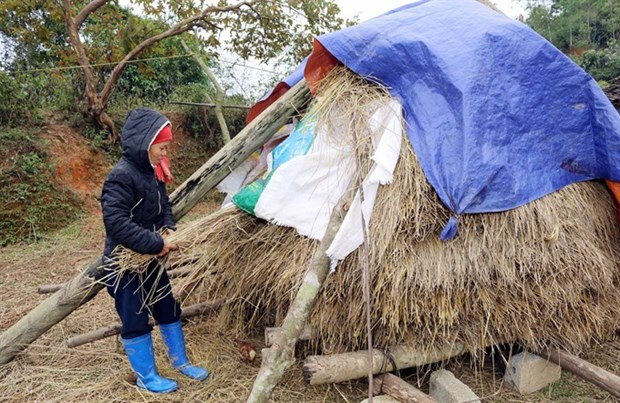Cold weather hits northern provinces hinh anh 1