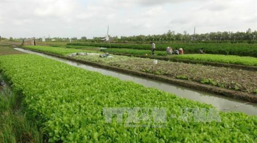 Tra Vinh calls for investment in agricultural projects hinh anh 1