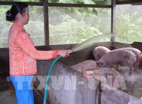 Animal breeding industry eyes 4 percent growth of production value hinh anh 1