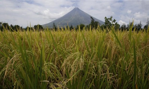 Philippines raises volcano alert level hinh anh 1