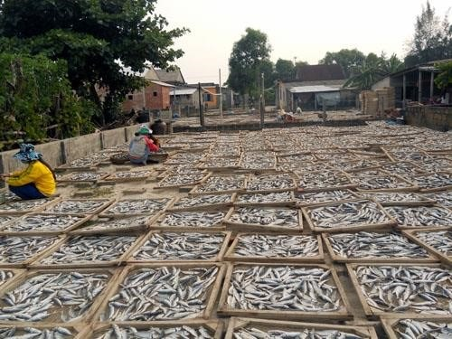 Mekong dried-fish villages prepare for Tet hinh anh 1
